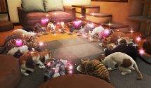 Yakuza 6 Cat Guide: How to Complete the Cat Café